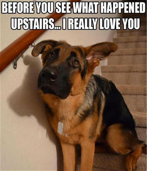 house dogs for kids funny dog pictures with quotes dog breeders guide