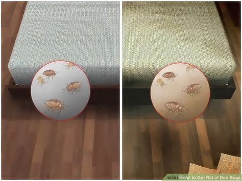 how to get rid of bed bug impressive how to get rid of bed bugs with pictures wikihow within kill bug eggs