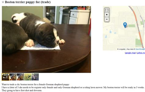 how to sell puppies on craigslist craigslist dogs for trade puppy leaks