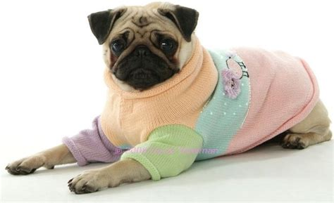 sweater pug 17 best images about fashion for dogs on amazing dogs and jacket