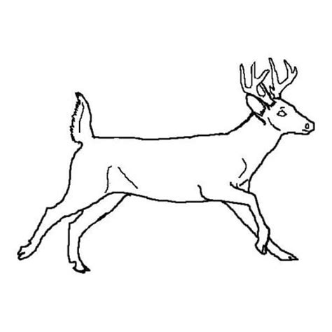 running deer coloring page free coloring pages of predators of animals