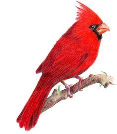 1000 ideas about cardinal birds for mosaic on pinterest