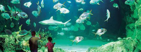 The Circular Dining Room Sea Life Sydney Aquarium Ferry Captain Cook Cruises
