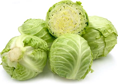 Kol Kubis Green green cabbage information recipes and facts