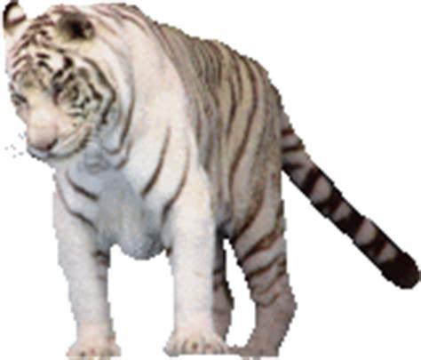 tutorial gambar gif rahmian4 gambar bergerak gif hewan buas jenis harimau