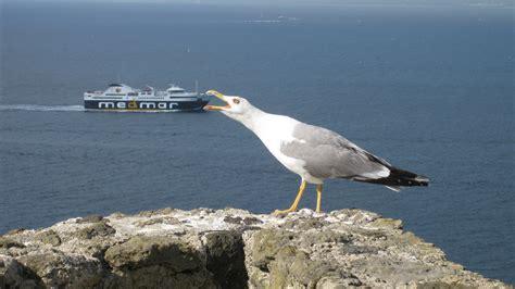 gabbiano mare gabbiano affamato viaggi vacanze e turismo turisti