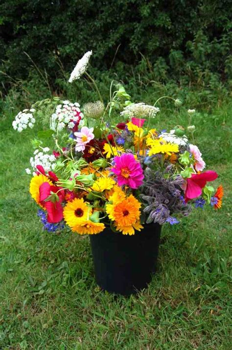 Top 50 Cut Flowers Higgledy Garden Best Flowers For The Garden