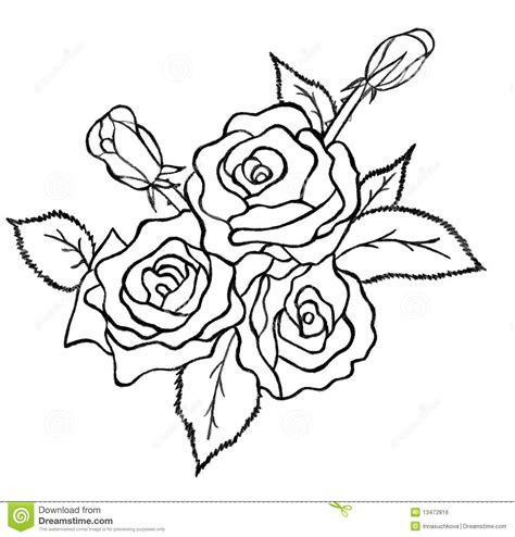 You Ve Garden Flower Bra Black bunch of roses sketch stock illustration illustration of