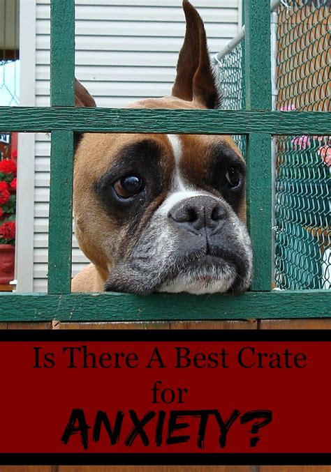 anxiety crate is there a best crate for anxiety dogvills