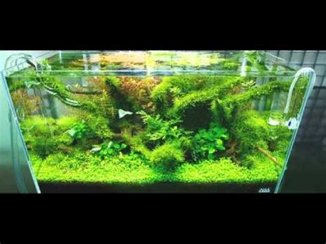 nature aquariums and aquascaping inspiration nature aquariums and aquascaping inspiration youtube