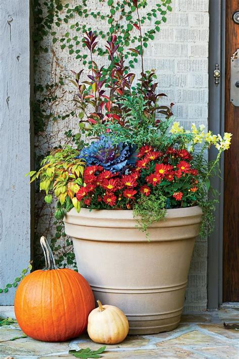 Fall Planter Ideas 17 best images about container gardens on container gardening elephant ears and ferns