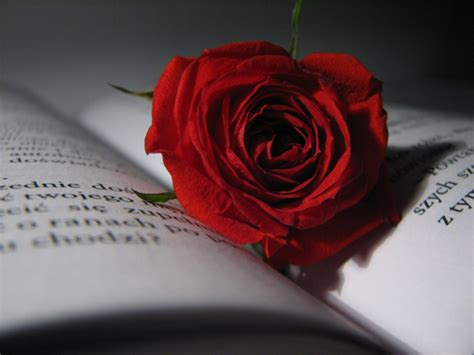 roses books a s day message