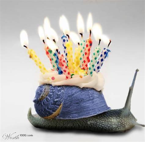 happy birthday snail Comments, Myspace happy birthday