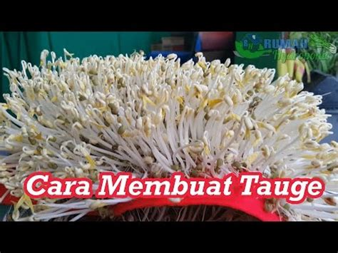 cara membuat teh in english cara membuat tauge phim sex hay em g 225 i m 250 p v 227 i
