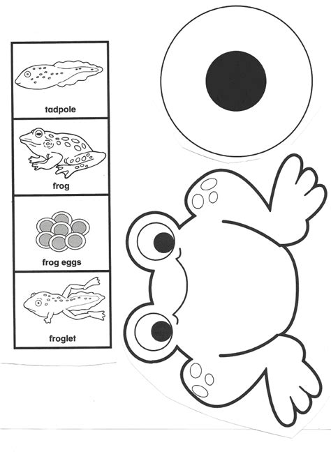 frog cycle template frog cycle worksheets car interior design