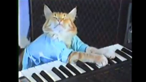 keyboard cat tutorial keyboard cat will play the puppy bowl halftime show