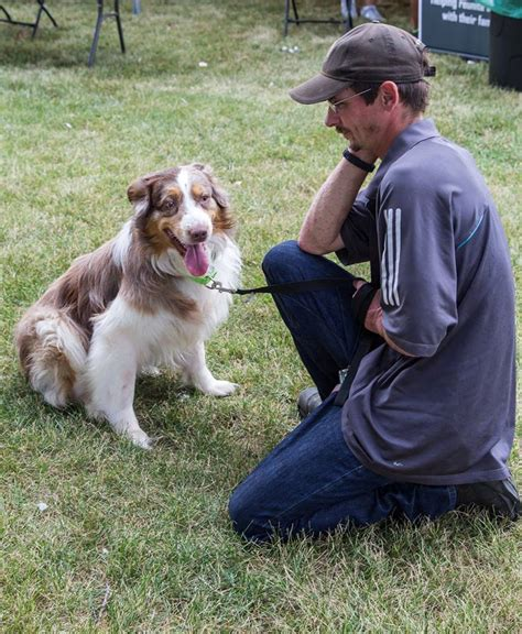 lost dogs illinois microchipping scanning lost dogs illinois