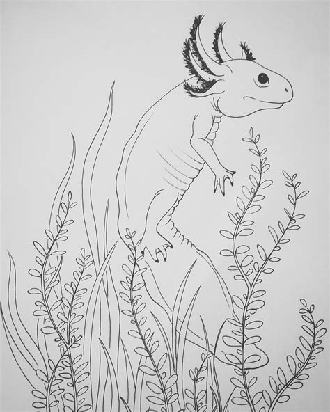 Axolotl Coloring Page by Axolotl Animal Coloring Pages Staruptalent