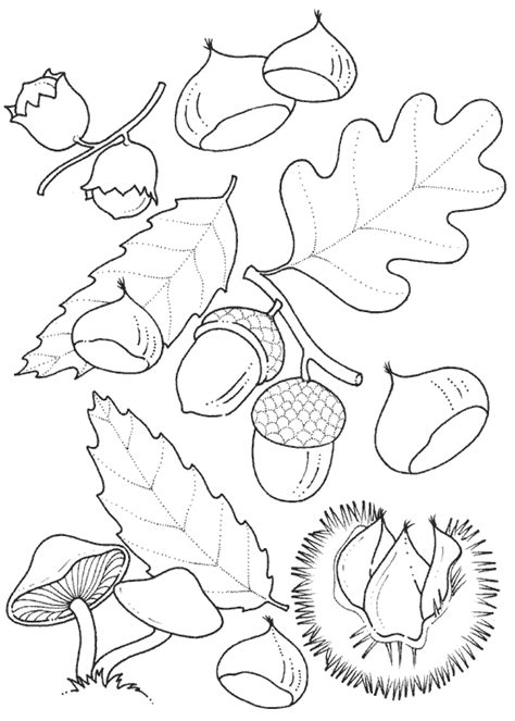 leaf border coloring pages free fall leaf border coloring pages