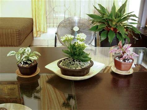 memilih tanaman hias  ruang tamu
