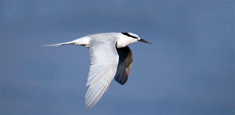 migratory birds and flyways birdlife download pdf