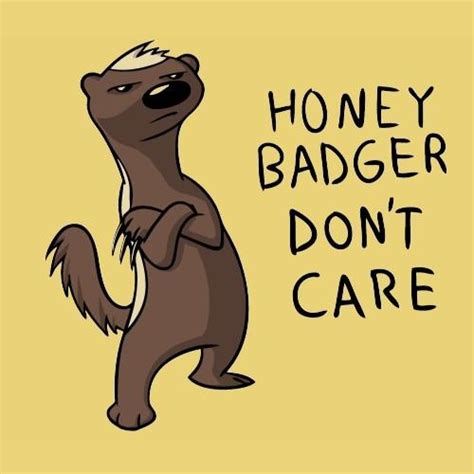 Honey Badger Don T Care Meme - honey badger don t care funny stuff pinterest