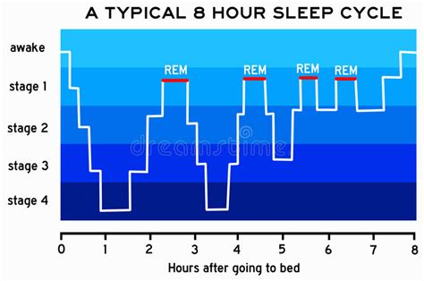 Typical Sleep Pattern 2 Year Old | sleep cycle stock illustration illustration of graph