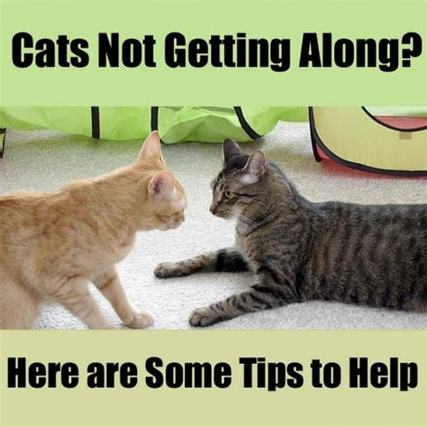 how to get dogs and cats to get along cats not getting along some tips to help pethelpful