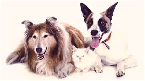 symptoms of uti in dogs uti in dogs and cats your pet s urinary tract infection petcarerx