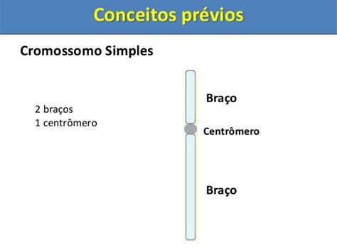 anna mitose e meiose mitose e meiose