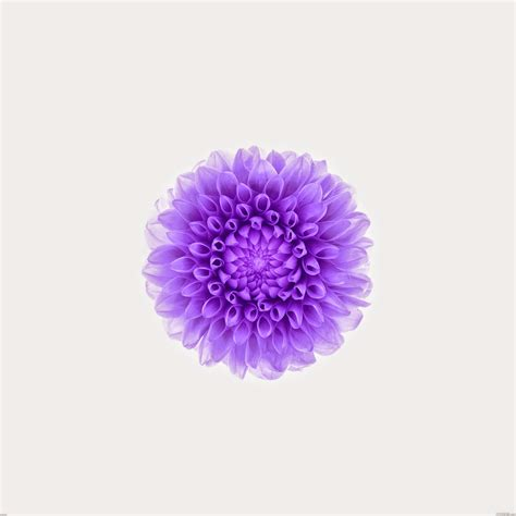 apple wallpaper purple flower ios 8 flower wallpaper wallpapersafari