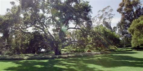 california backyard trees oprah reads sue monk kidd s letter to nature