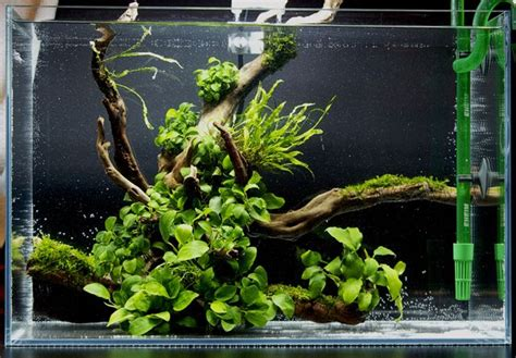 simple aquascaping ideas anubias aquascape wabi kusa pinterest beautiful