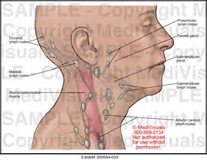 lymph nodes ear diagram archives human anatomy chart