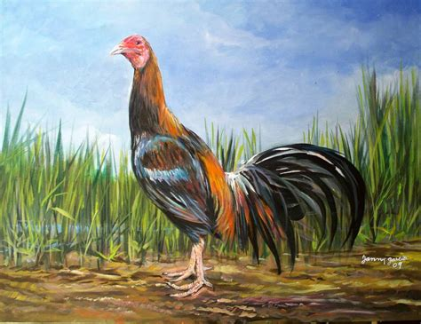 rep dominicana pelea de gallos gallo de pelea janny garcia liranzo artelista com