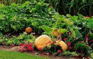 pumpkin garden pictures png hi res 720p hd