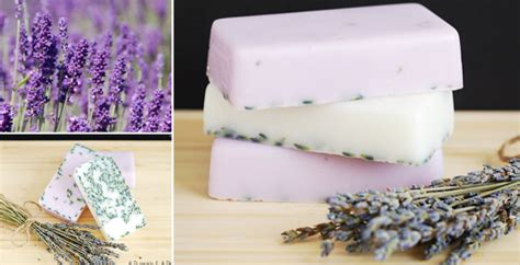 Handmade Lavender Soap Recipe - how to make lavender soap diy crafts handimania
