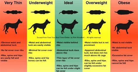 lab puppy weight chart my new black lab now i one of each of color of these aww