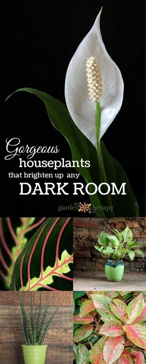 plants for a dark room best 25 indoor flowers ideas on pinterest