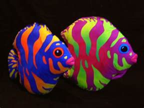 neon colored fish neon colored fish pictures to pin on pinsdaddy