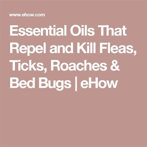 does lavender repel bed bugs does repel bed bugs 28 images guide to bed bug