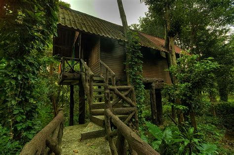 amazing tree house wallpapers top 20 beautiful and amazing tree house wallpapers pics