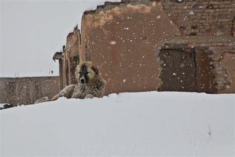 adobe dog house free photo dog winter snow house free image on pixabay 60708