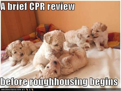 puppy cpr would you give your pet aid cross