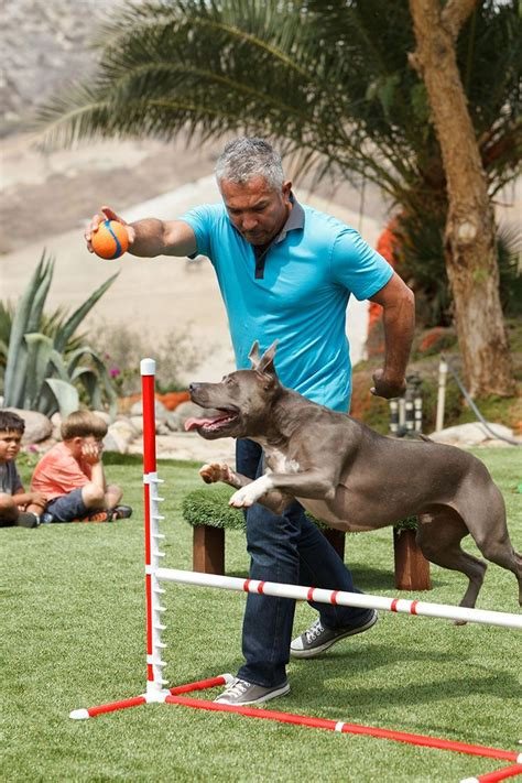 cesar trainer 17 best images about whisperer cesar millan on