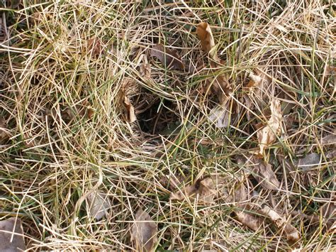 small holes in backyard do you have holes like these in your yard sagebrush lessons