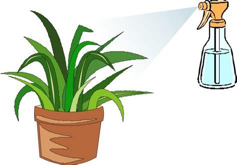 imagenes de insecticidas naturales trucos y remedios para alejar las plagas de tus macetas ii