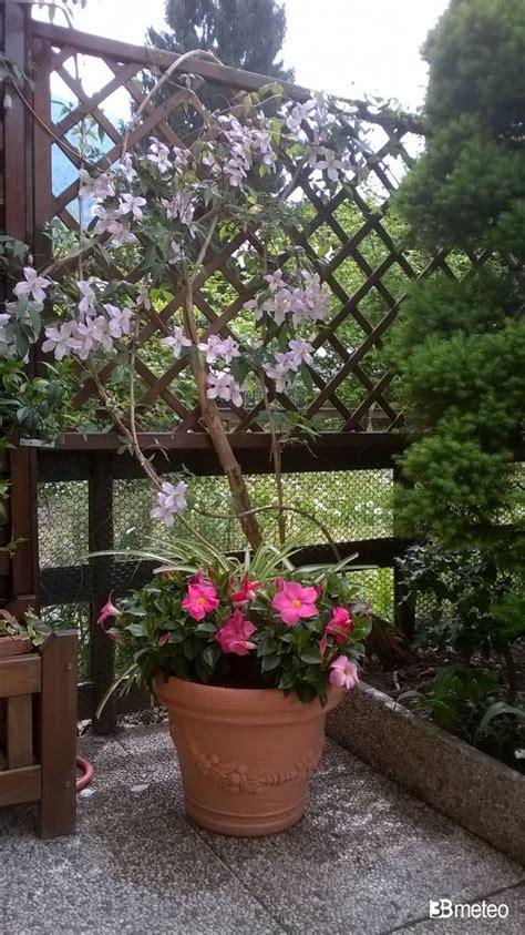maggio in fiore maggio in fiore foto gallery 171 3b meteo