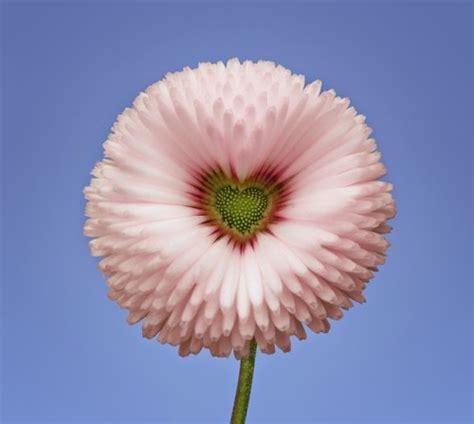 imagenes de flores exoticas para descargar 90 im 225 genes y mensajes con flores hermosas ex 243 ticas con