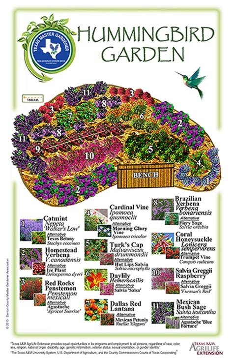 Hummingbird Garden Layout Iconservepa Hummingbird Hummingbird Garden Layout